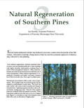 Natural Regeneration of Southern Pines